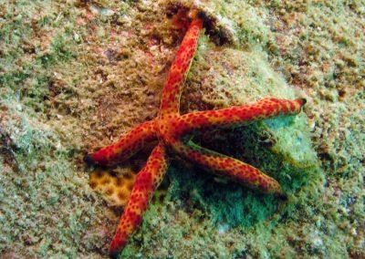 Multicolor Sea Star